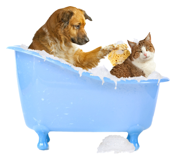 great image of dog bathing a cat!